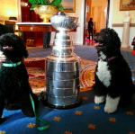 Hat trick: Sunny, Stanley, and Bo. #GoHawks stanley cup dogs