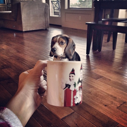sad dog sitting in a coffee cup with elves